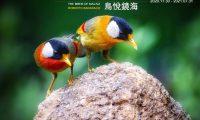 """""""Aves de Macau"""" na galeria virtual do IIM até Julho de 2021"""